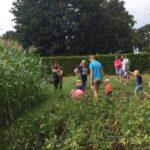 Moestuin op kiindvriendelijke boerencamping in Drenthe
