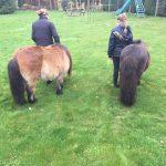 Paarden verzorgen op minicamping Drentsheerlijk