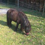 Paardrijden op minicamping Drentsheerlijk