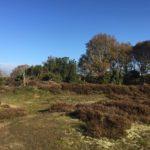 Wandelen en fietsen op boerencamping in Drenthe
